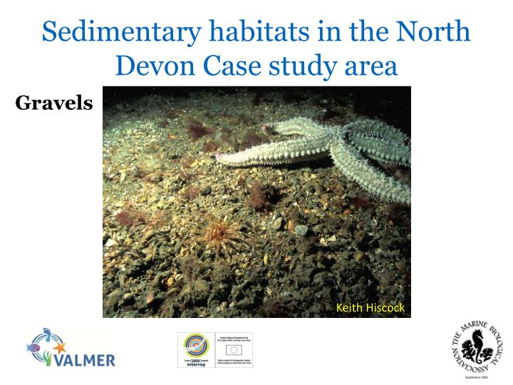 Sedimentary habitats in the North Devon Case study area