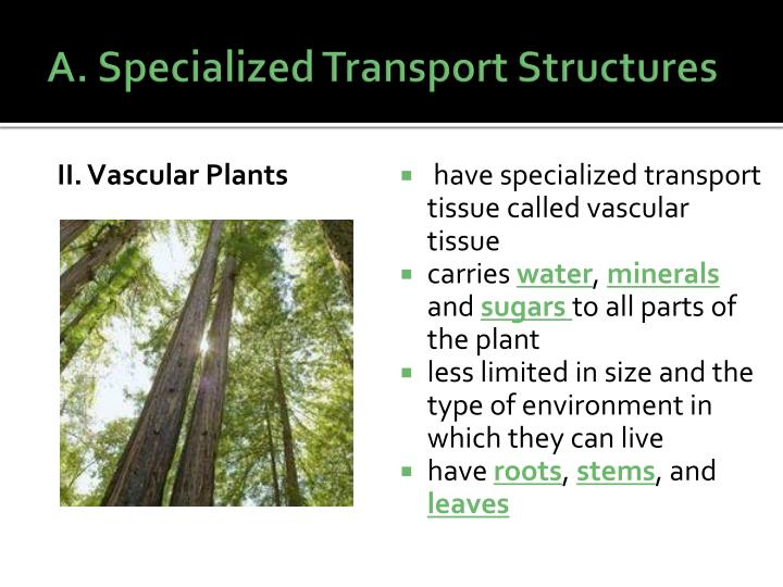 A. Specialized Transport Structures