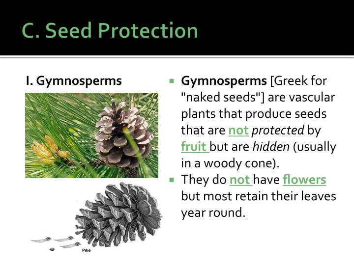 C. Seed Protection