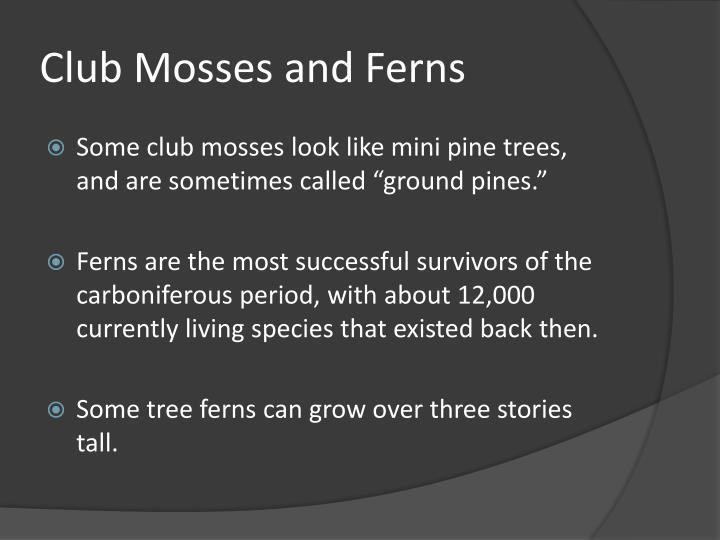 Club Mosses and Ferns