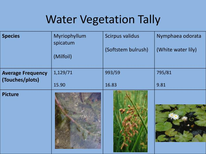 Water Vegetation Tally