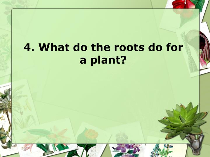 4. What do the roots do for