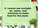6 leaves use sunlight air water and nutrients to make food for the plant