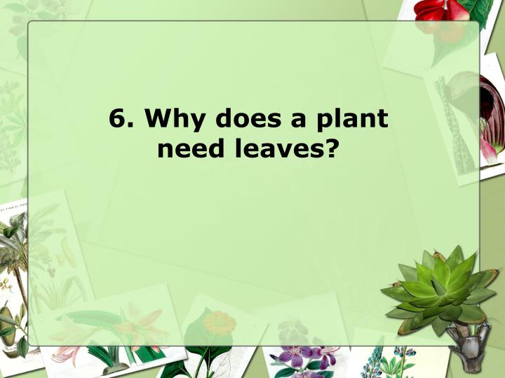 6. Why does a plant