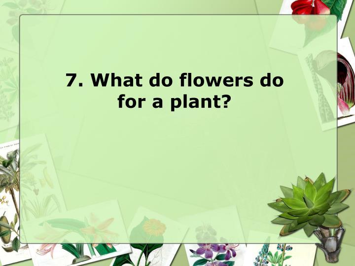 7. What do flowers do
