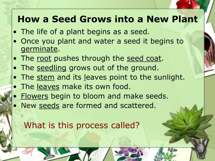 The life of a plant begins as a seed.
