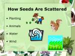 how seeds are scattered