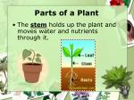 parts of a plant1
