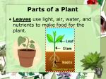 parts of a plant2