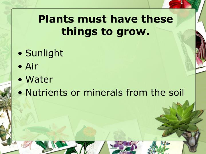 Plants must have these things to grow.