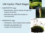 life cycles plant stages