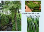 plant reproduction seedless plants