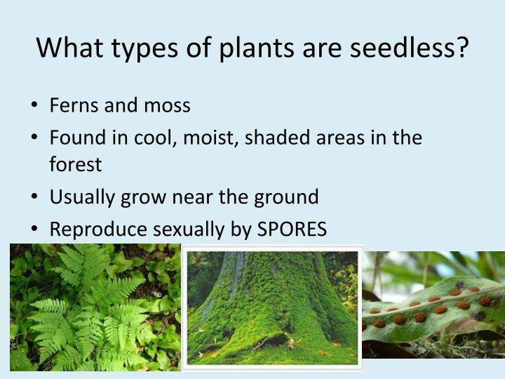 What types of plants are seedless?