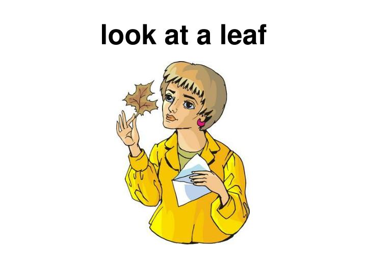 look at a leaf