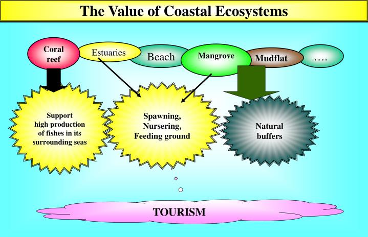 The Value of Coastal Ecosystems
