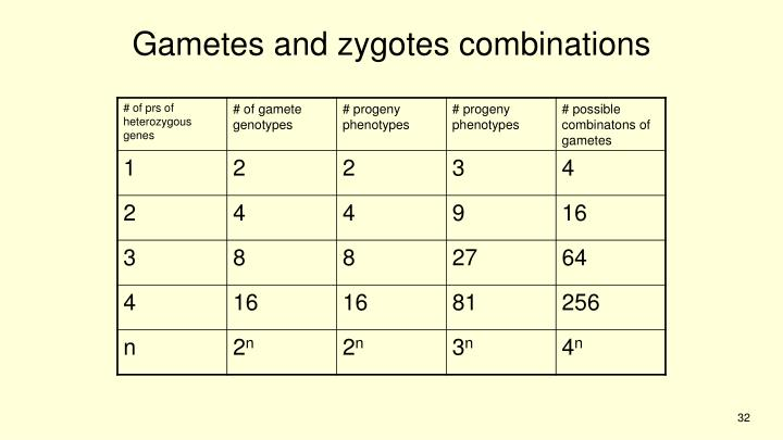 Gametes and zygotes combinations