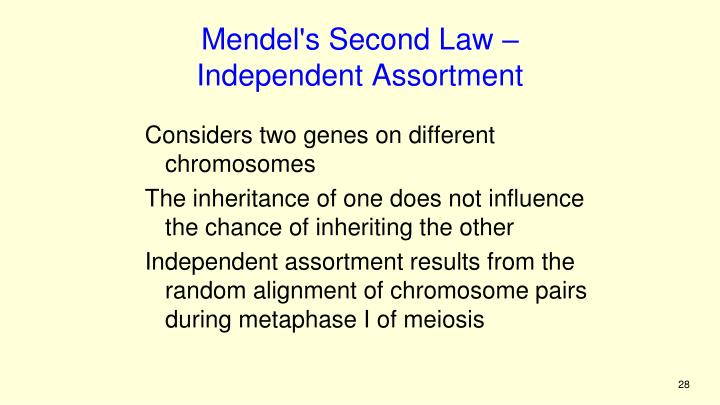 Mendel's Second Law –