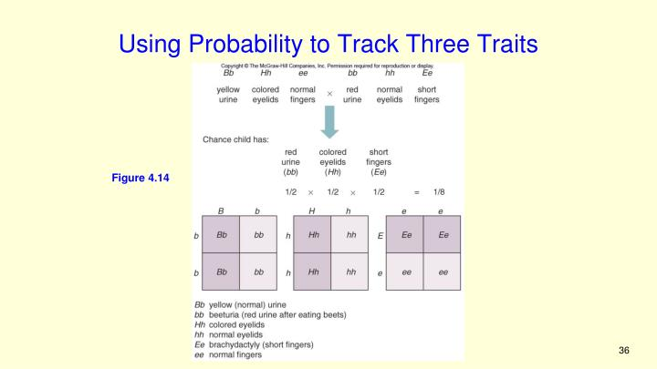 Using Probability to Track Three Traits