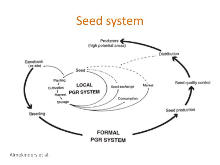 Seed system