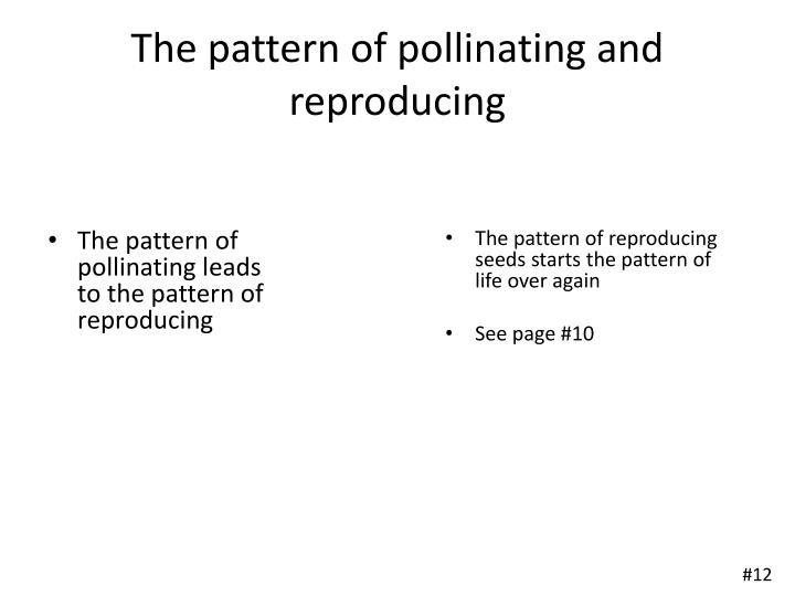 The pattern of pollinating and reproducing