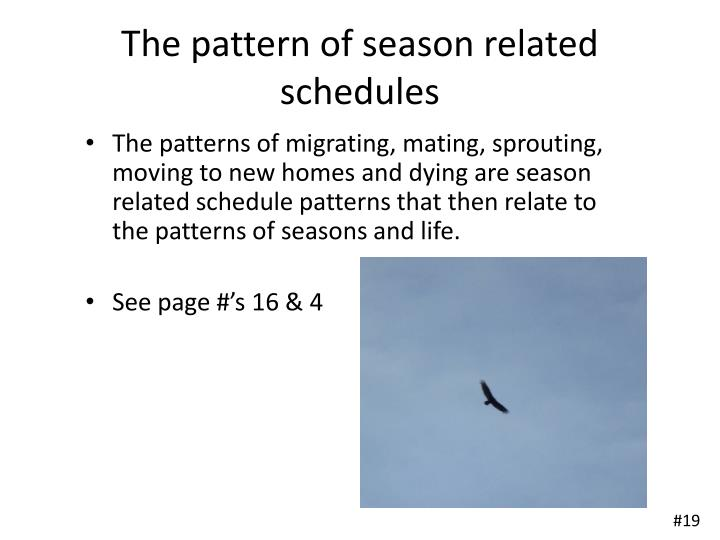 The pattern of season related schedules