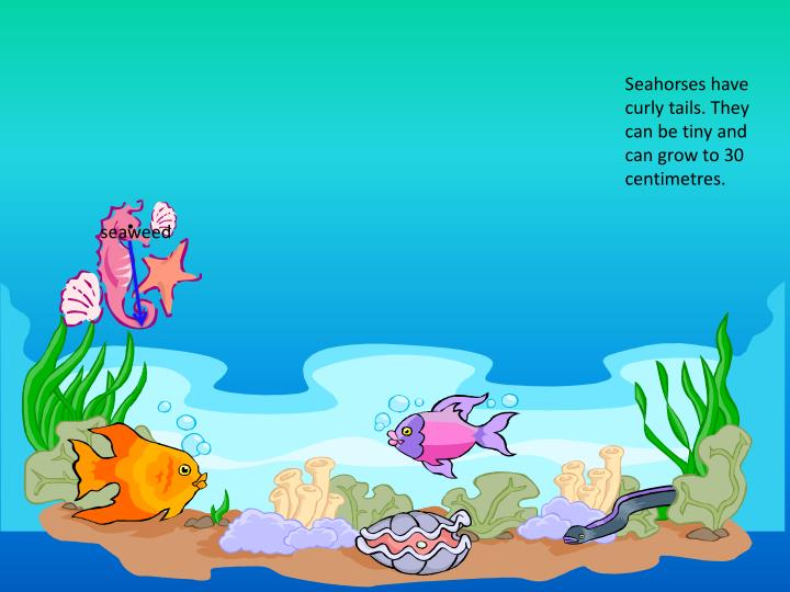 Seahorses have curly tails. They can be tiny and can grow to 30 centimetres.
