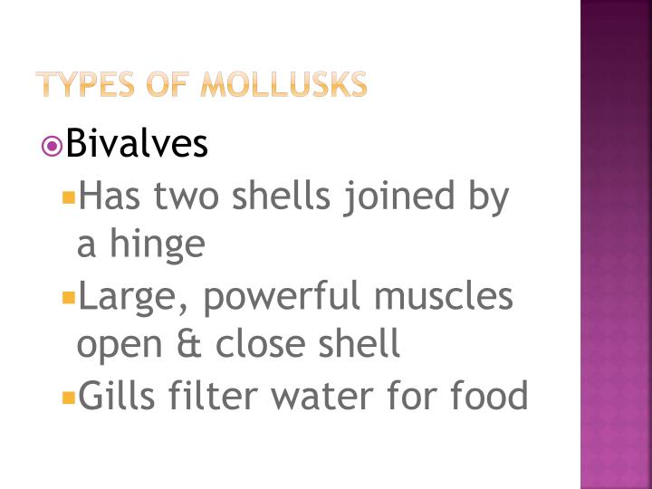 Types of mollusks
