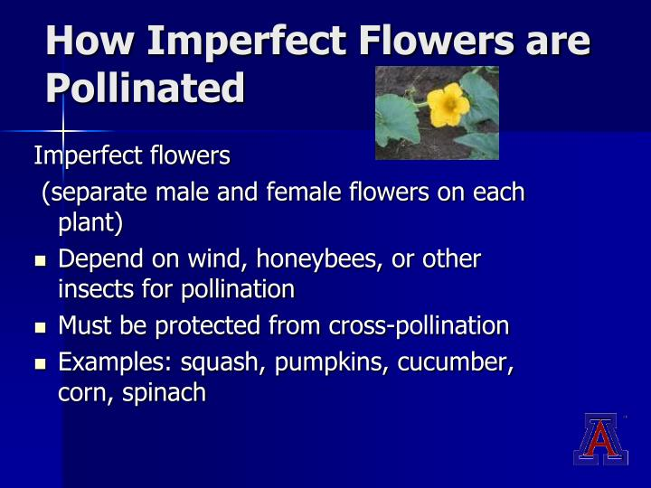 How Imperfect Flowers are Pollinated