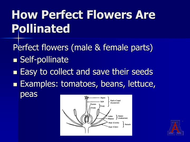 How Perfect Flowers Are Pollinated