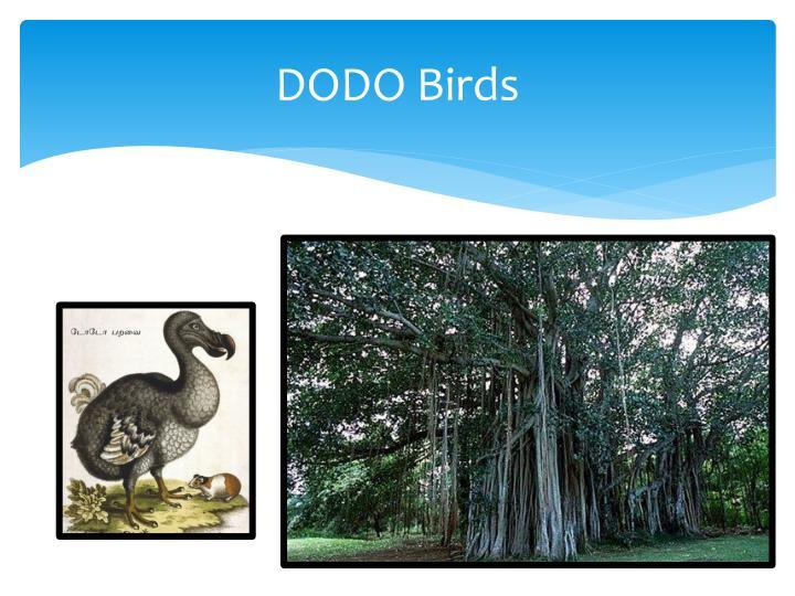 DODO Birds
