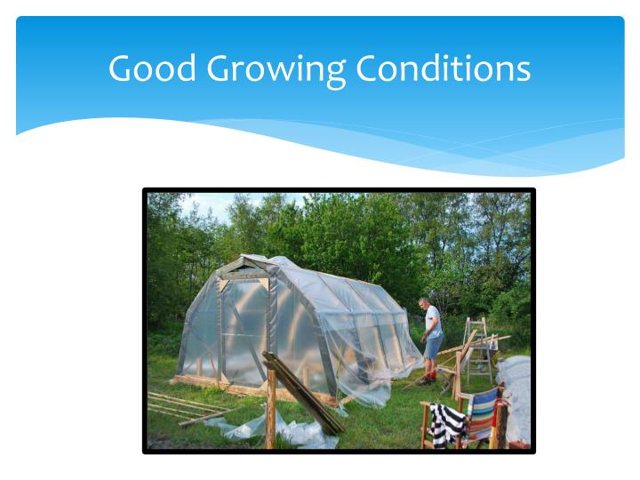 Good Growing Conditions