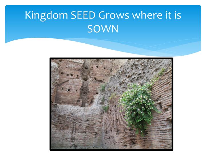 Kingdom SEED Grows where it is SOWN