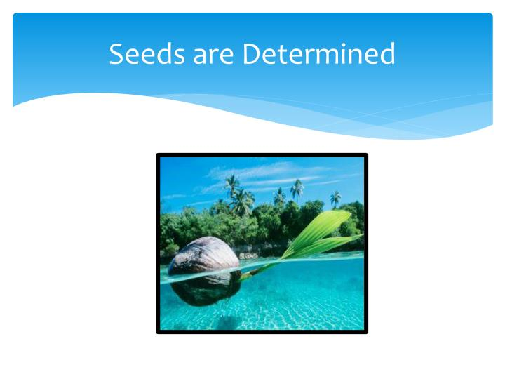 Seeds are Determined