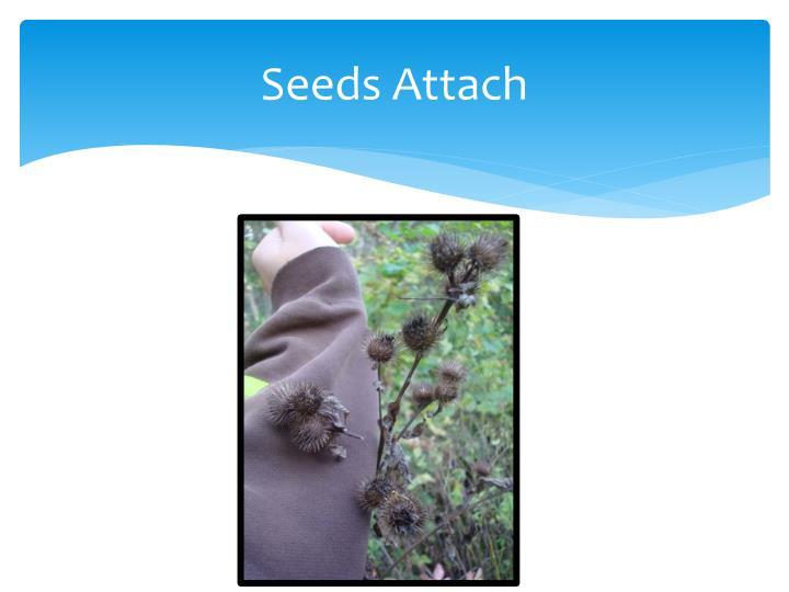 Seeds Attach