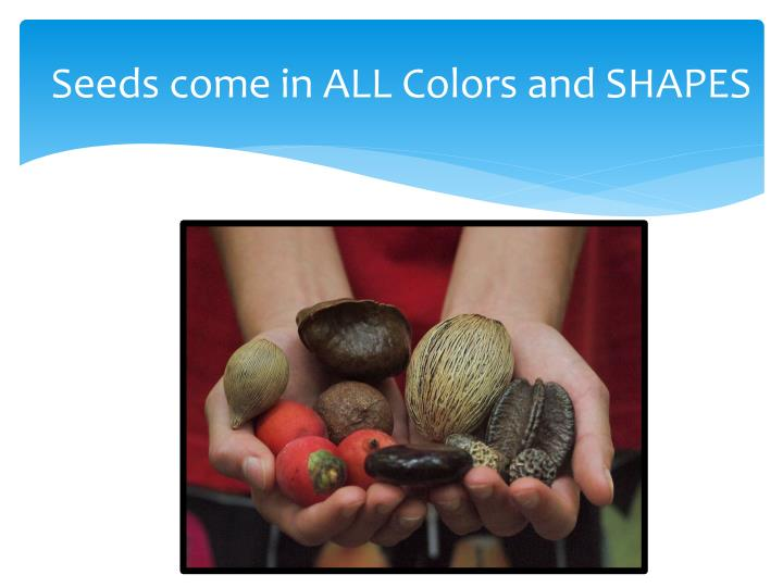 Seeds come in ALL Colors and SHAPES