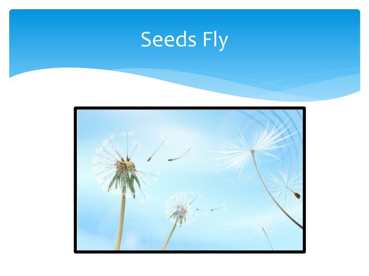 Seeds Fly