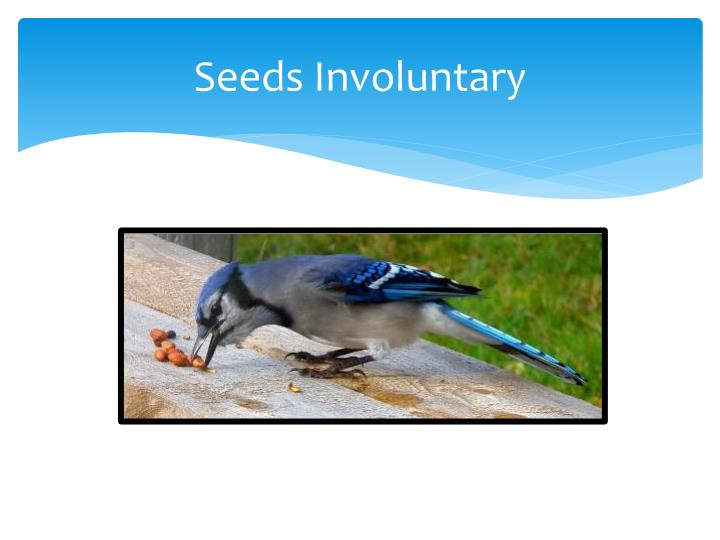 Seeds Involuntary