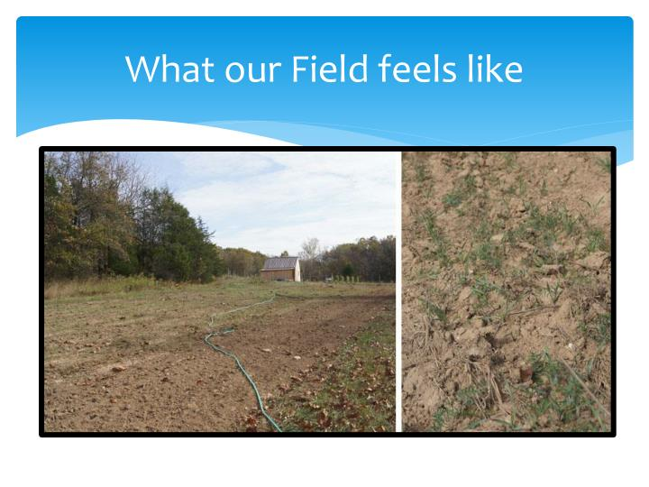 What our Field feels like