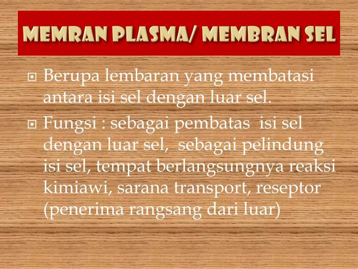 Memran Plasma/ Membran sel