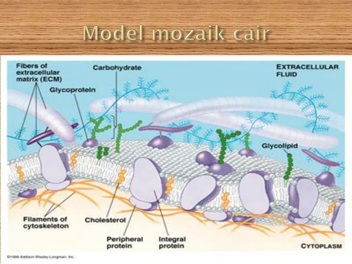 Model mozaik cair