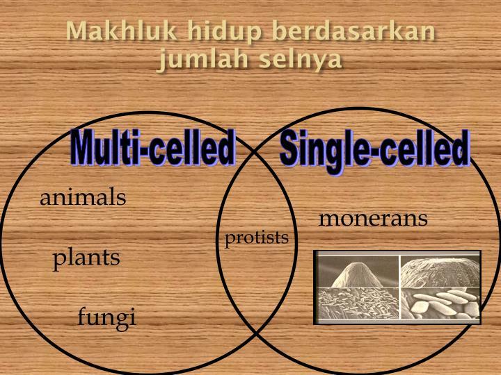 Makhluk hidup berdasarkan jumlah selnya