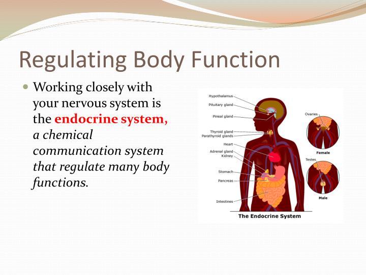 Regulating Body Function