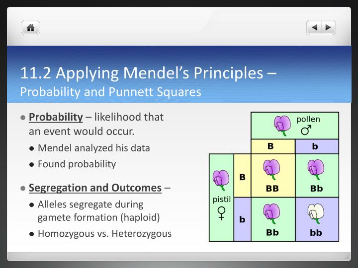 11.2 Applying Mendel's Principles –