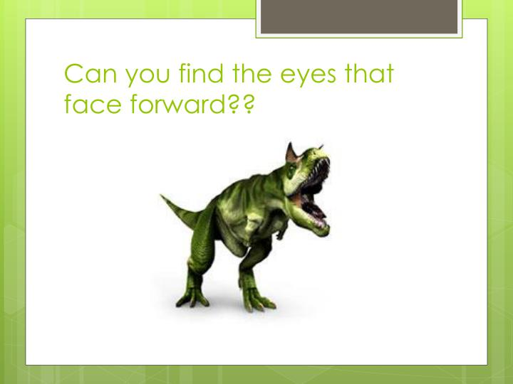 Can you find the eyes that face forward??