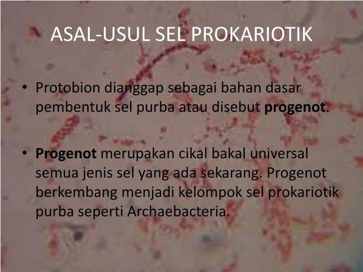 ASAL-USUL SEL PROKARIOTIK