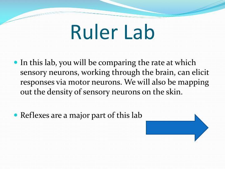 Ruler Lab