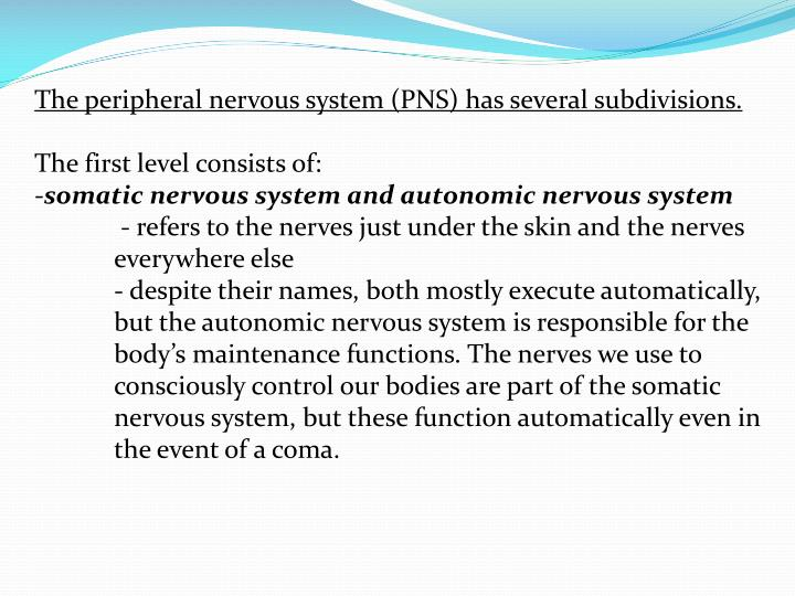 The peripheral nervous system (PNS) has several subdivisions.