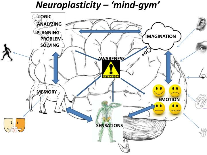 Neuroplasticity – 'mind-gym'