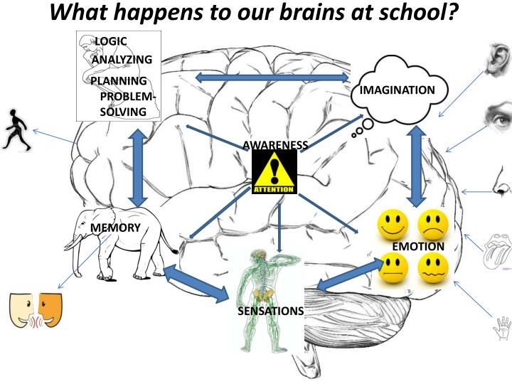 What happens to our brains at school?