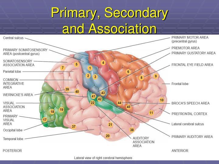 Primary, Secondary